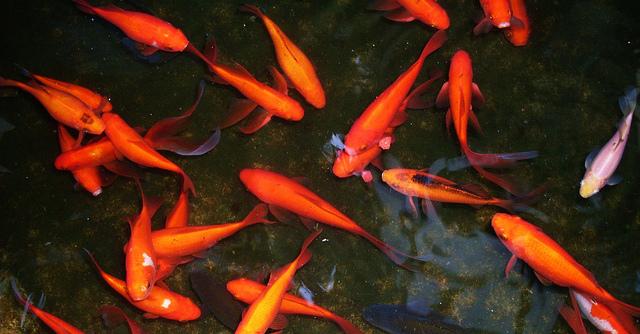 La evoluci n depende de la adaptaci n al medio de la for Diseno de estanques para peces